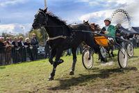 Sulkyrennen auf dem Herbstfest