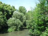 Bäume im Stadtpark