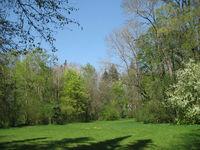 Wiese im Stadtpark
